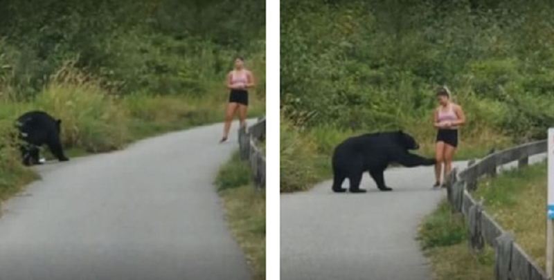 joggeur rencontre ours égaré)